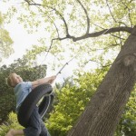 Climb, Swing, Snuggle: Reading Readiness Involves the Whole Body